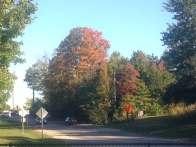 """""""The First Signs of Fall""""- Submitted by Edo Steinberg"""