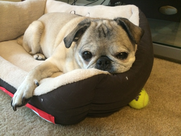 I could have written an entire article about Biscuit, a very important member of Jessica's family and the world's cutest pug. Jessica credits Biscuit for helping her get through her dissertation. If you're lucky maybe you'll see them both on campus one day!