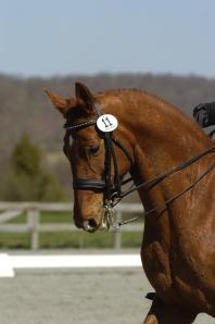 Barb's horse, Livingston.